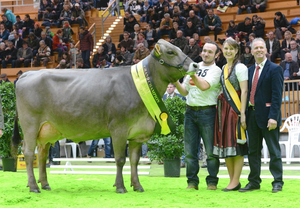 Champion Braunvieh Alpengirl