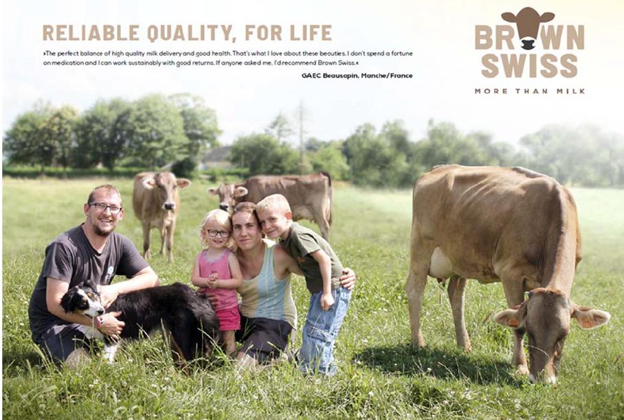 Rückblick auf die neue Brown Swiss‐ Werbekampagne